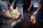 Europe, France, Ardeche. Hunting wild boar. Local populations are deeply divided between hunt lovers and haters. 1994.'MEAT' across the World..foto © Nigel Dickinson