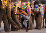 A mahout mounts his elephant, Jaipur, India