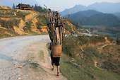 Hmong hill tribe woman carrying basket of firewood, Sapa, Vietnam