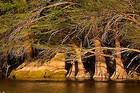 Images For Conservation Pro-tour Images