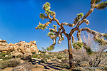 Joshua Tree National Park located in Southern California.