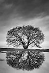 Tree and reflection, Lake Biwa, Shiga Prefecture, Japan