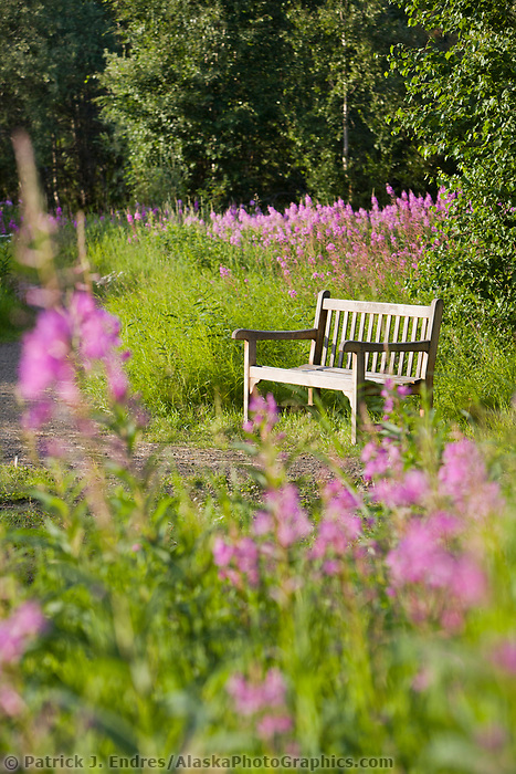 Park bench along a trail at Creamer's field migratory waterfowl refuge, Fairbanks, Alaska