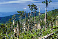 Acid Rain Damage, Forest Decline, Mt. Mitchell, NC