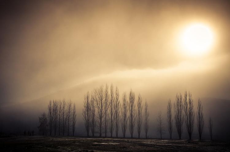 Winter trees in mist near Lowburn, Central Otago, South Island, New Zealand