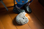 _2SM1367; Russia, June, 2012. RUSSIA-10059. A sleeping kitten on the floor. <br />