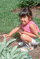 Child girl feeling softness of lambsears (Stachys) leaves plant in the garden, in summer with shorts, looking into camera making eye contact