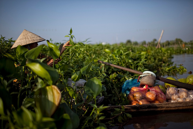 """A woman harvests a grass vegetable called """"co xuoc"""" on the Hau Giang River, a tributary of the Mekong River, in Long Xuyen, the capital of An Giang Province, Vietnam. When the Mekong River reaches Vietnam it splits into two smaller riveres. The """"Tien Giang"""", which means """"upper river"""" and the """"Hau Giang"""", which means """"lower river"""". Photo taken on Monday, December 8, 2009. Kevin German / Luceo Images"""