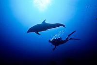 Dolphin and scuba diver<br /> Virgin Islands