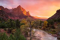 The Watchman at sunset in Zion National Park is one sight many tourists aim to see.  A stunning light show provides a little extra beauty to Utah's desert.