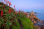 Marine gardens Park in Monterey CA.