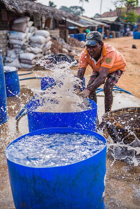 Fisherman washing fish in negombo fish market lellama for Williams fish market