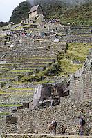 Peru, Machu Picchu.  Tourists Above View Ruins from the Guardhouse Terraces.  Tourists below Greet Alpaca.