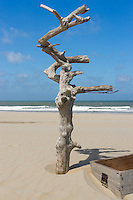 A chest and a dead tree on a sunny beach