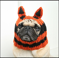 BNPS.co.uk (01202 558833)<br /> Pic: JessicaFurtado/BNPS<br /> <br /> ***Please use full byline***<br /> <br /> Tiger hat<br /> <br /> Barking mad entrepreneur Jessica Lynne has set tails wagging after launching her own fashion line for pug dogs. The 22-year-old's hand knitted hats and costumes transform the cute canines into characters such as a ladybird, an alien, an aviator, Batman and even Minnie Mouse. Dog-mad Jessica was inspired to launch her canine couture after knitting her adopted pug a wacky hat to keep him warm through cold winters. The Snuggly Pug Alien hat was such a hit with fellow pug owners she founded her company All You Need is Pug while still studying for a university degree in English. Her crazy creations have also had the thumbs up from the dinky dogs themselves, who are happy to parade them with pride.