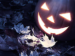 Spooky carved pumpkin on fallen leaves. Jack-o-lantern Halloween concept.