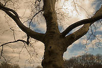 Detail of a tree in Central Park,NY