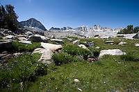 High Alpine Meadow near Bishop Pass