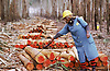 Shiselweni Forestry Co Ltd Swazi woman worker spray felled trees