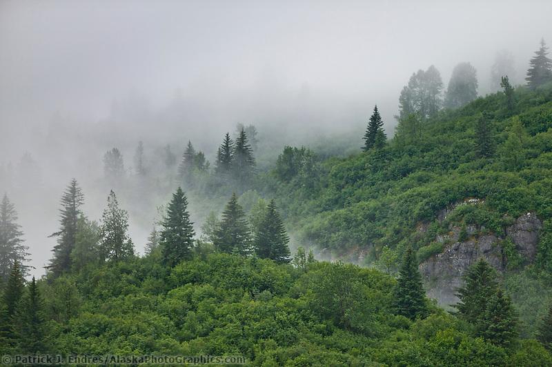 Morning fog hovers over the forest along the shores of Glacier Bay National Park, Alaska
