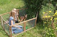 Rehkitz, Reh-Kitz, Kinder kümmern sich um wenige Tage altes, verwaistes Jungtier in einem Auslauf im Garten, Kitz, Tierkind, Tierbaby, Tierbabies, Europäisches Reh, Ricke, Weibchen, Capreolus capreolus, Roe Deer, Chevreuil