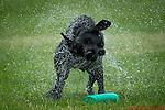 Favourite Dog Trials, Clay Shoots, Portraits