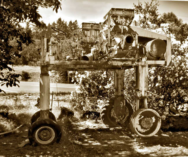 Old mechanical grape picker, adapted from tomato picking machine