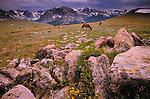 Elk, Rocky Mountain National Park, Colorado, USA