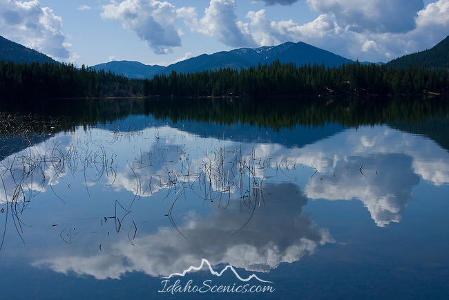Montana, Kootenai River Country, Cabinet Mountains,Bull Lake. The view of Bull Lake with reeds and reflections in the calm water. From Dorr Skeels campground in Spring.