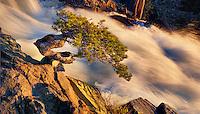 Wild Bonsai at Sunrise