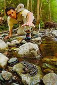 A herpetologist catching a Marsh Frog (Rana ridibunda) along a small stream in Romania.