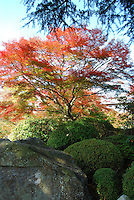 Beautiful nature photography of red foliage tree and Japanese garden rock. Landscape stock images taken by Paul Chong.