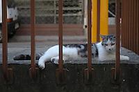 Rail cat