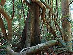 Rainforest, Kbal Spean, Cambodia
