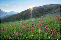 One of these days I'll write a blog about my favorite locations to photograph Colorado wildflowers amid sweeping landscapes. In the top 5 on that list would be a not-as-well known area (except to locals) close to Berthoud Pass called Butler Gulch (actually closer to Empire than Winter Park). In the summer of 2014 the colors were the best I'd seen - and I'd visited the iconic Colorado locations like American Basin near Lake City and Yankee Boy Basin near Ouray earlier in the summer. I imagine the landscapes near Crested Butte were excellent this summer, but I hit that location a bit early.<br /> <br /> This Colorado wildflower image comes from Butler Gulch early one morning as the sun peeked over the ridge. The paintbrush were plentiful and the it seemed the morning was nearly perfect.<br /> <br /> Butler Gulch is one of my favorite Colorado locations for wildflowers and landscapes. I make the trek up here several times each summer. Many folks use this trail, so go early because parking is limited. You'll have the place to yourself unless I'm up there!