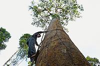 Hamsah and his brother Boni are the only climbers in the family and in the village. They also make the ladder of perches that allows them to climb a tree. With a ring of interlaced rattan, they encircle the tee and install little by little their wooden perches. This technique, unlike that of the jantak which uses rungs of bamboo nails driven into the trunk, does not damage the tree and allows for sustainable exploitation of these centuries old trees. ///Hamsah et son frère Boni sont les seuls grimpeurs de la famille et de leur village. Ils fabriquent également l'échelle de perches qui leur permet de monter. À l'aide d'un  anneau de tiges entrelacées de rotin, ils ceinturent le tronc et installent bout à bout leurs perches de bois. Cette technique, contrairement à celle du jantak qui utilise comme des marches des clous de bambous enfoncés dans le tronc, n'abîme pas les arbres et permet une exploitation pérenne de ces arbres centenaires.
