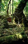 Buttress Tree in Jungle, Monterverde, Costa Rica, Central America.Costa Rica....
