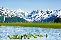 Lush marsh grass contrasts with the ice and snow of Skookum Glacier and the Chugach Mountains in Chugach National Forest in Turnagain Arm in Southcentral Alaska. Summer. Evening.