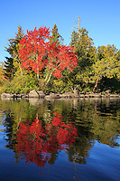 &quot;Brilliant Autumn Blaze&quot;<br />
