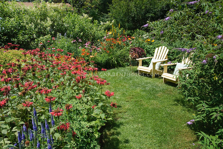 Monarda, daylilies Hemerocallis, lawn Adirondack chairs, Veronica, Ligularia, Buddleia shrubs, lawn grass, in perennial summer flower garden