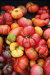 Odd shaped fresh tomatoes for sale at market