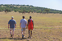 Walking tour on the Masai Mara, Kenya, Africa