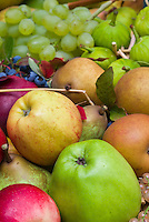 Harvested fruits and berries apples malus pears pyrus, currants Ribes, grapes, figs, in autumn fall, pile of mixed fruit