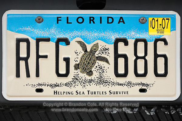 pk70419-D. Sales of these license plates contribute to sea turtle conservation. Florida, USA, Atlantic Ocean..Photo Copyright © Brandon Cole. All rights reserved worldwide.  www.brandoncole.com..This photo is NOT free. It is NOT in the public domain. This photo is a Copyrighted Work, registered with the US Copyright Office. .Rights to reproduction of photograph granted only upon payment in full of agreed upon licensing fee. Any use of this photo prior to such payment is an infringement of copyright and punishable by fines up to  $150,000 USD...Brandon Cole.MARINE PHOTOGRAPHY.http://www.brandoncole.com.email: brandoncole@msn.com.4917 N. Boeing Rd..Spokane Valley, WA  99206  USA.tel: 509-535-3489