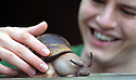 The Snail Tickler of Trowbridge.