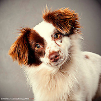 Adoption rates up at the Sacramento city animal shelter. Great dog photos help dogs get adopted.