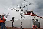 September 16, 2009. Raleigh, North Carolina..Artist Roxy Paine will was on site at the North Carolina Museum of Art to assemble and install Askew, a 43-foot-tall stainless steel tree-like sculpture as part of the ongoing renovations of the museum.. The model of the tree used to help assembly is carried by a construction worker as Paine, 2nd from left, directs his assistants in the welding of the sculpture.