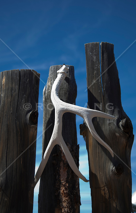 bleached antler hanging from a wooded fence in New Mexico