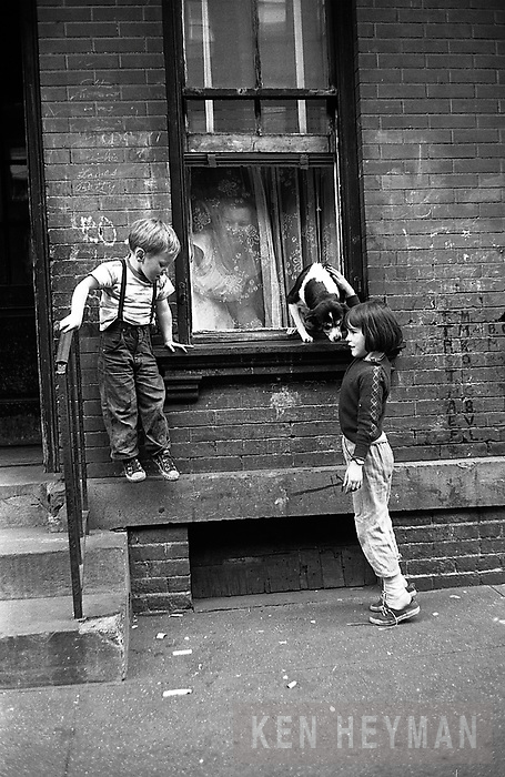 Willie, playing with a neighbor's dog in Hell's Kitchen.