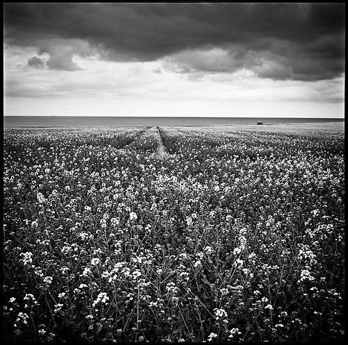 Happisburgh Landscape | Black & White Film Photography